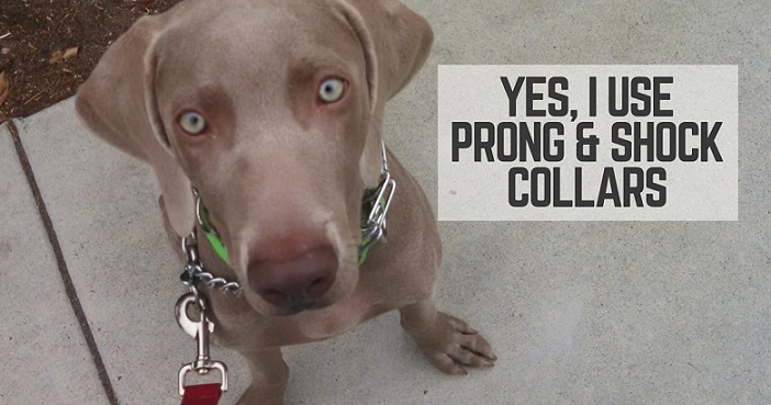 Yes, I use prong and shock collars