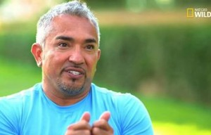 I'll be watching Cesar Millan's new show, Cesar 911