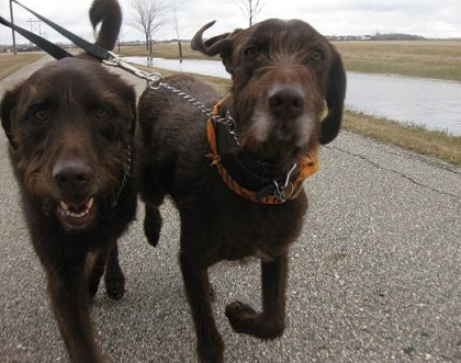 Running with two dogs - Ranger and Annie
