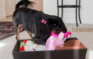 The Tidy Dog toy bin helps teach dogs to put their toys away