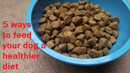 Can You Feed Your Dog Raw Food On A Budget