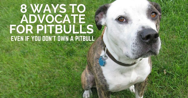 8 ways to advocate for pitbulls