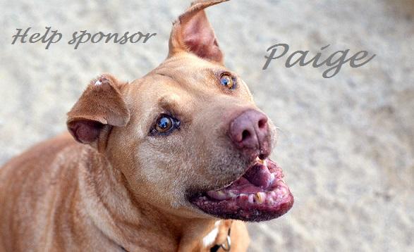 Help sponsor Paige