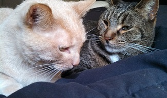 My kitties Beamer and Scout