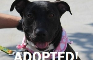 Mindy has been adopted!
