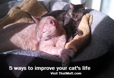 How to improve your cat's life
