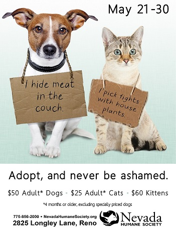 Pet Shaming Promotion Poster Nevada Humane Society
