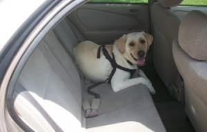 Help a dog that doesn't like riding in the car