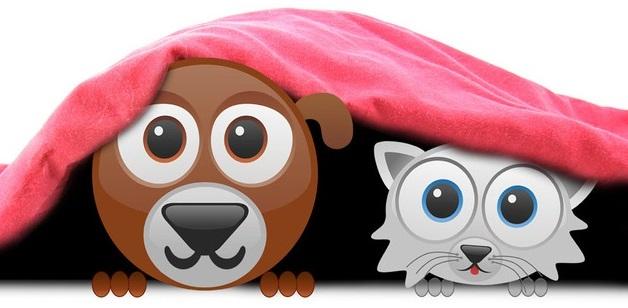 Buddy Blanket Comforter