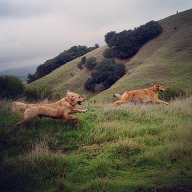 Happy dogs running and hiking with Paws & Go