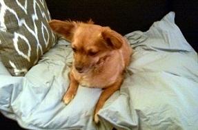 Buddy Blanket comforters