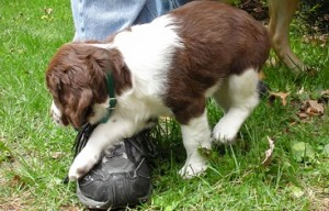 10 reasons to buy a dog from a breeder