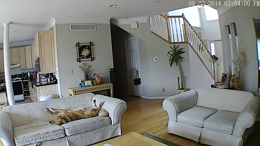 Golden retriever relaxing on the couch