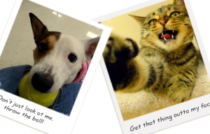 What's the funniest thing you've caught your dog or cat doing?