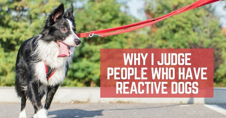 Why I judge people who have reactive dogs