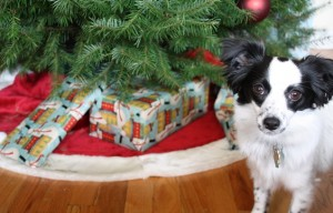 That dog that pees on the Christmas tree and other funny pet stories