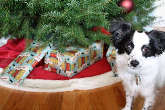 Modie_Christmas Tree