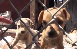 Homeless dog and puppies rescued near downtown Los Angeles – video