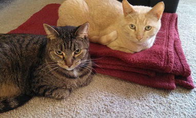 My cats Scout and Beamer