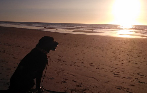 My dog Ace watching sunset