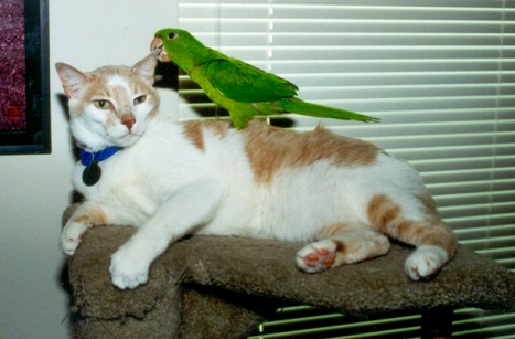 Parrot sitting on cat's back
