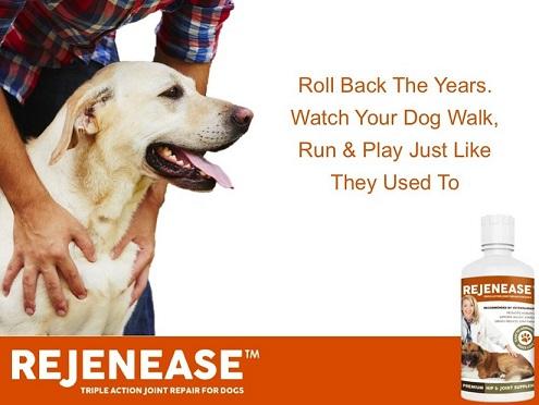 Rejenease liquid glucosamine supplement for dogs
