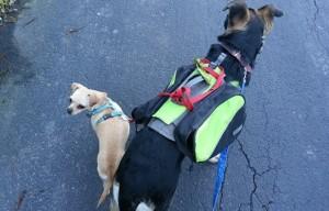 Dog walking challenge – day 16 #ActiveMutts