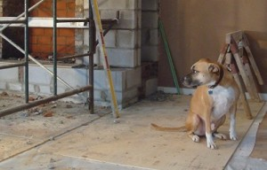 Tips for renovating with your dog