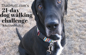 That Mutt's walking and training challenge starts tomorrow