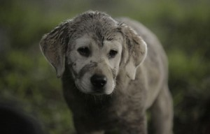 Budweiser releases new Super Bowl ad with puppy 'Lost Dog'