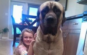 Kirkland dog food update: Man admits food did not kill his dog