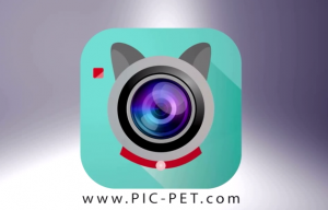 Pic-Pet Camera app makes various sounds to get dogs and cats to look