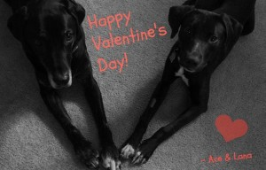 Happy Valentine's Day from Ace and Lana