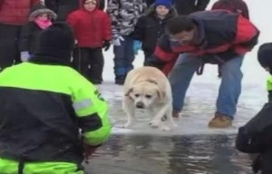 Dog participates in a polar plunge – Is this animal abuse?