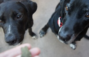 How to train two dogs – separately or together? #GreenBarkGummies