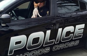 This Utah police department has a rat terrier as its mascot