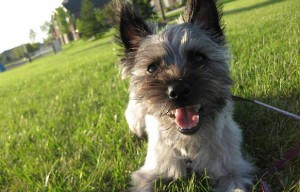Choosing A Dog – What Dog is Right for You?