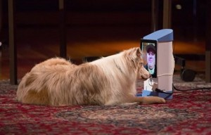 iCPooch – Would You Ever Video Chat With Your Dog Or Cat?