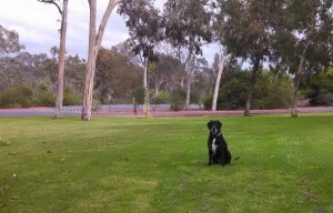 5 Tips For Teaching A Dog To Stay Reliably