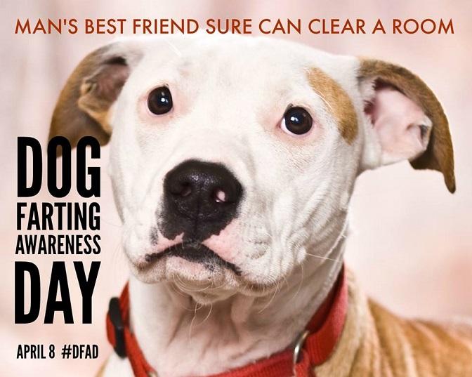 Dog Farting Awareness