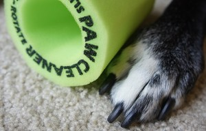 Dog Paw Sponge – Affordable, Easy Way to Clean Muddy Paws