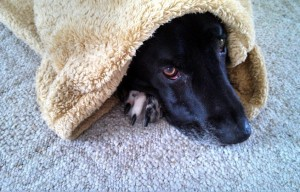 What to Do if Your Dog is Scared of Thunder