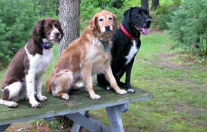 Should Children Be Allowed in Dog Parks?