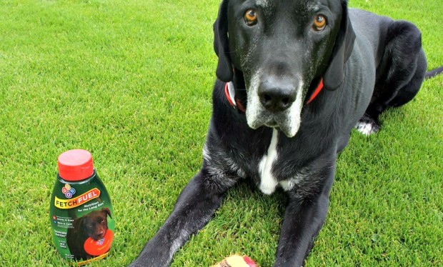 Enter to Win a Bottle of Glucosamine for Your Dog – FetchFuel Review