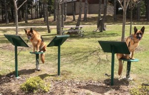 Active Mutts!