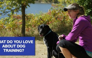 What Do You Love About Training Your Dog?
