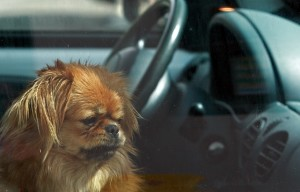 Would You Break A Car Window to Save A Dog?