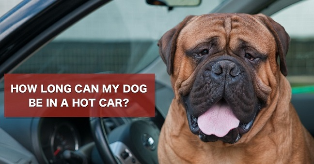 How long can my dog be in a hot car?
