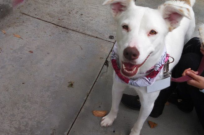 Euthanize Dog At Home San Diego