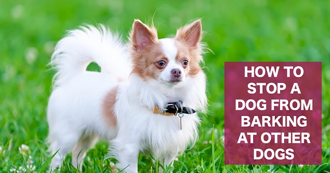 how to get dog to stop barking at other dogs on walks